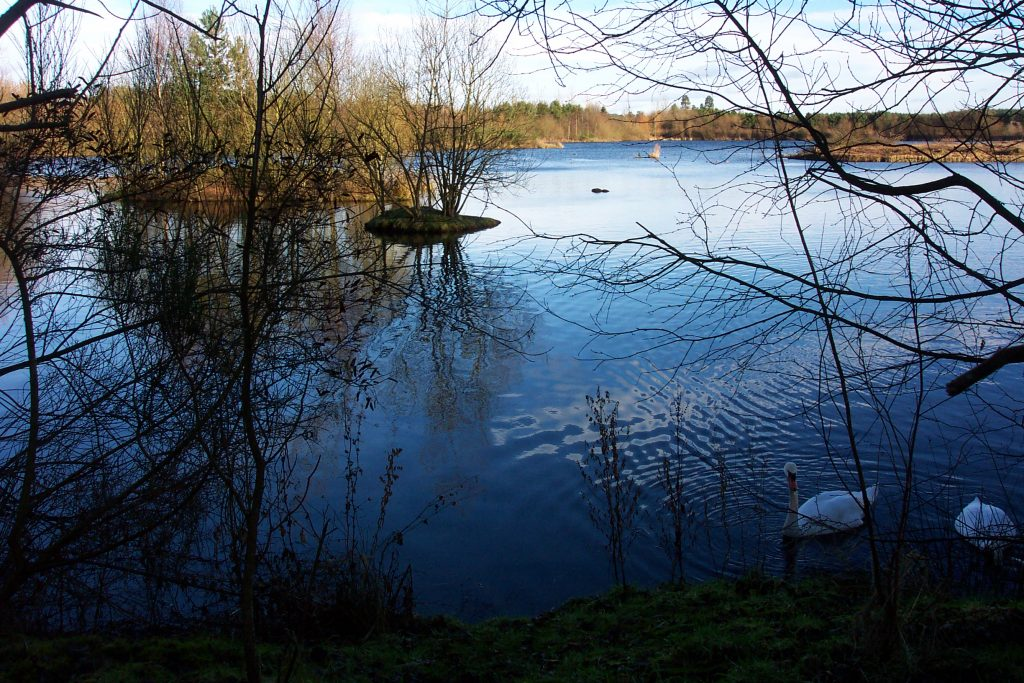 Swans on the still blue water at Birnie Loch